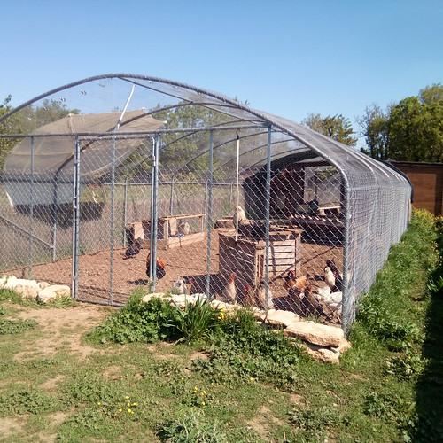 Oeufs de nos poulettes en liberté